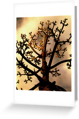 Spirit Tree by Julie Marks