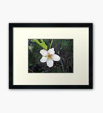 Wild tree flower Framed Print