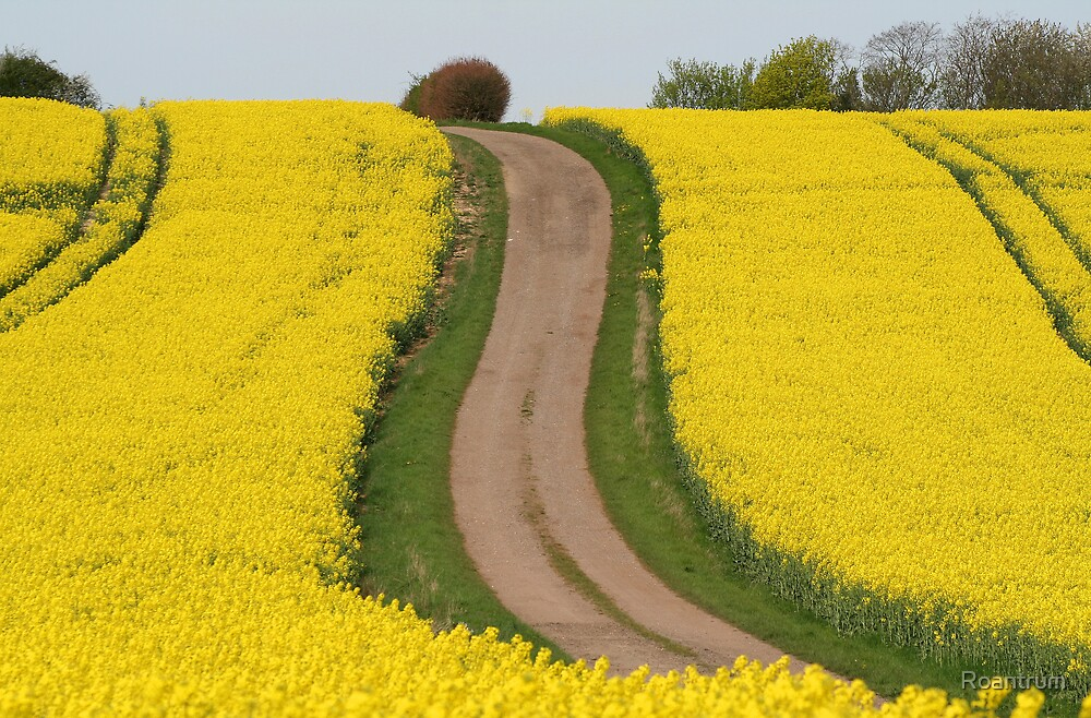 Track Through Yellow by Roantrum