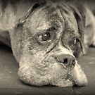 Luthien's Portrait In Monochrome - Boxer Dog Series by Evita