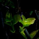 Rain Gives New Life To The Dying Plants  by Carlo Cesar Rodillas