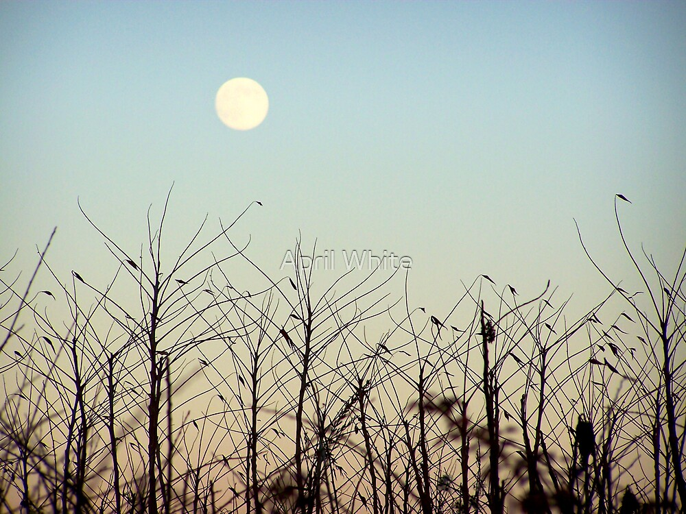 Early Evening Moon by April White