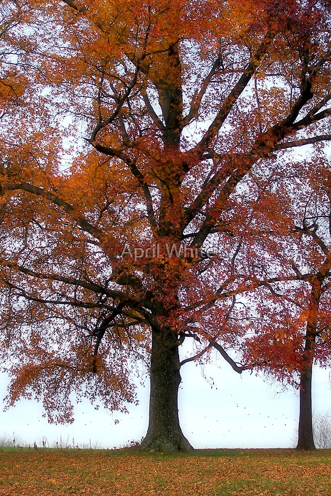 Fall Colors by April White
