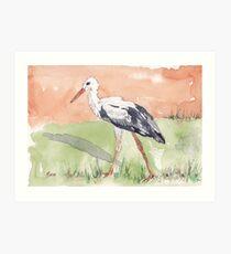 White Stork (Ciconia ciconia) Art Print