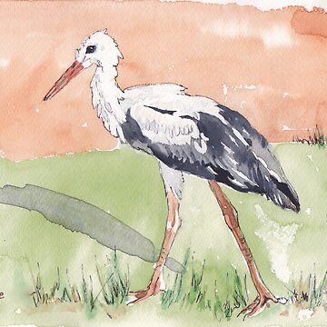 White Stork (Ciconia ciconia) by MareeClarkson