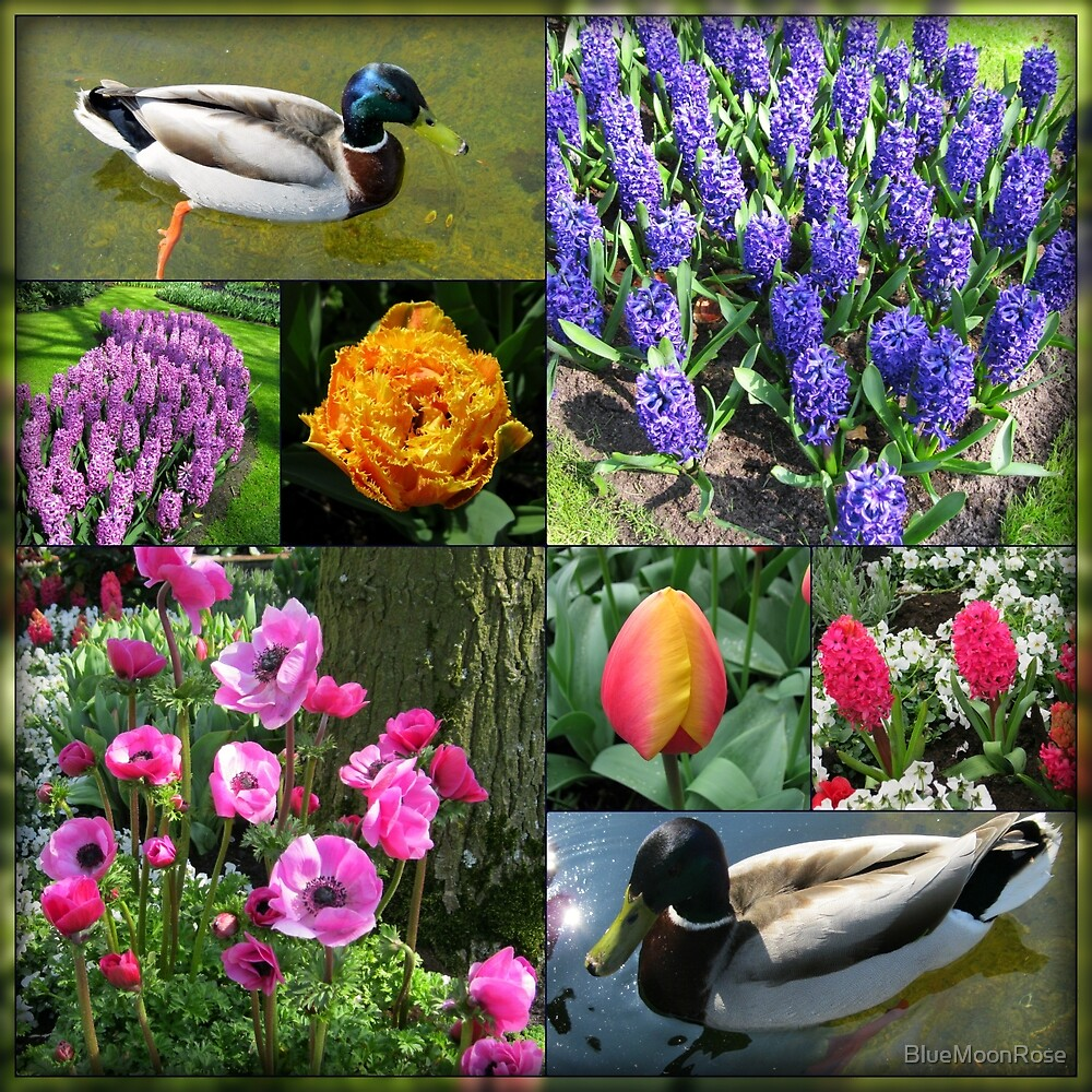 Flowers and Feathers - Keukenhof Collage von BlueMoonRose