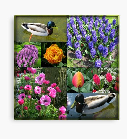 Flowers and Feathers - Keukenhof Collage Leinwanddruck