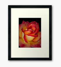 Scarlet and gold Framed Print