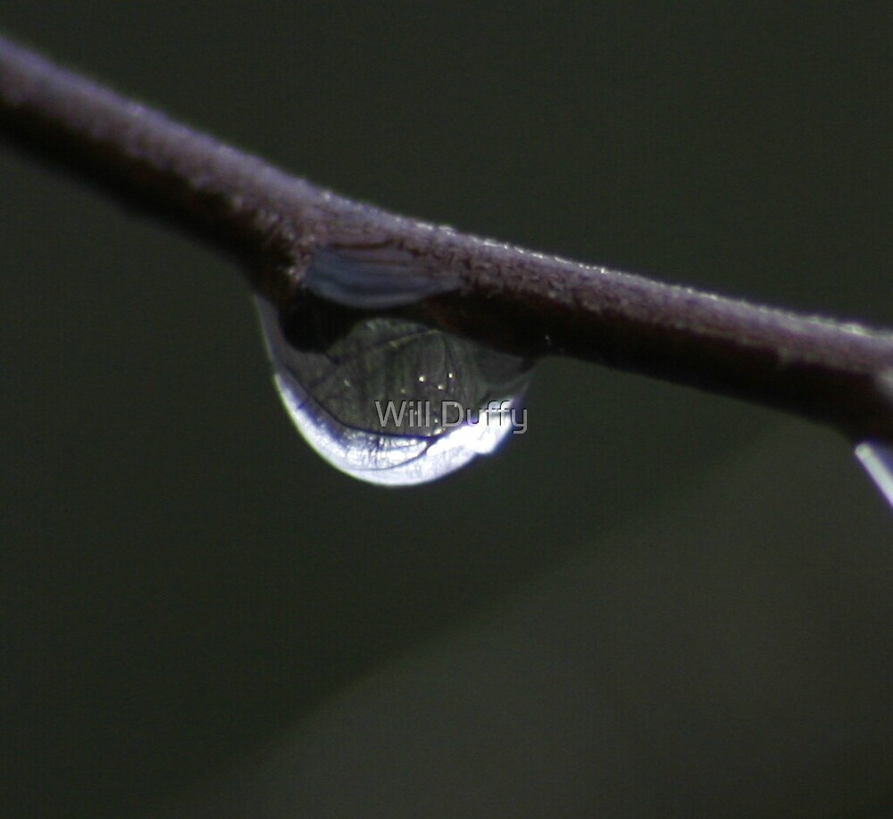 In a single drop by Will Duffy