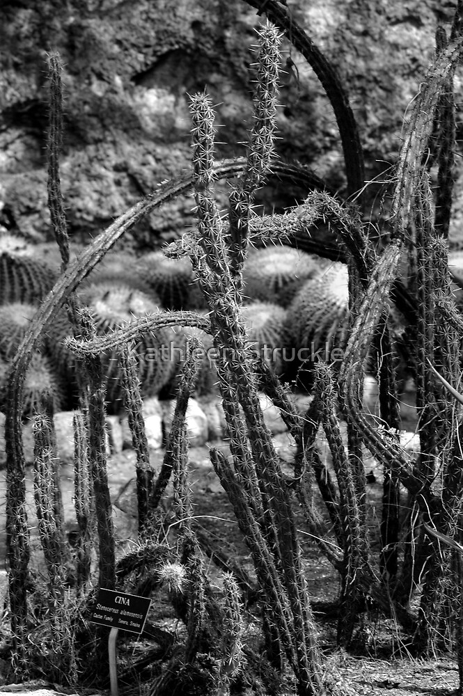 Variety Of Cactus by Kathleen Struckle
