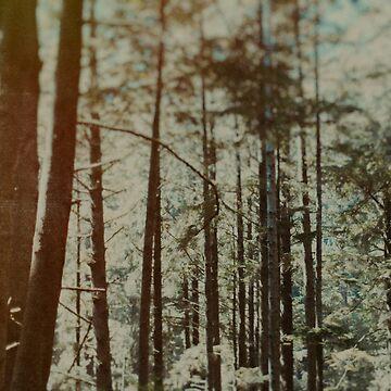 Oregon Woods by adventurlings