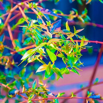 Colors of Nature by Sariplier