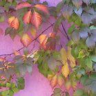 Pastel beauty in a garden wall. by DAdeSimone