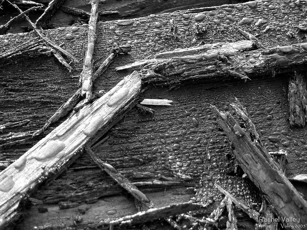 Dew on Wood by Rachel Valley