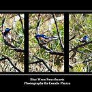 Blue Wren Sweethearts by Coralie Plozza