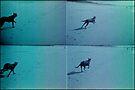 running dog sandy beach by Juilee  Pryor