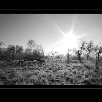 grim landscape by rkss
