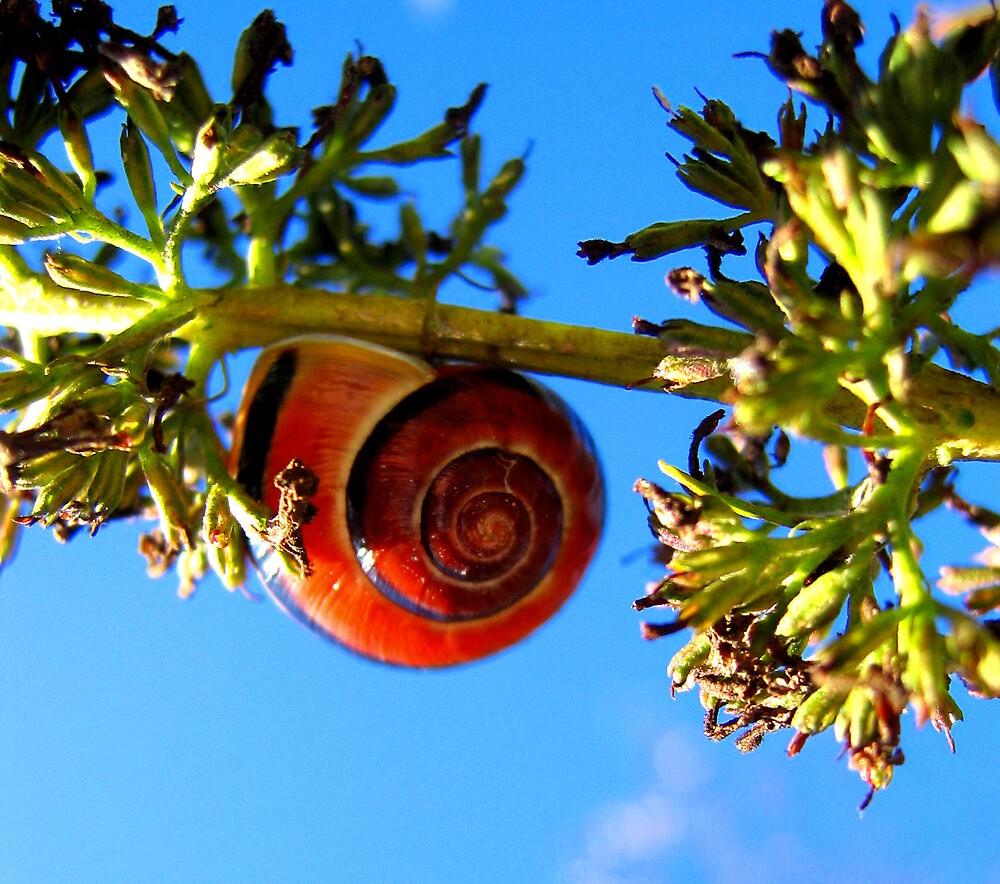 snail by carlala00