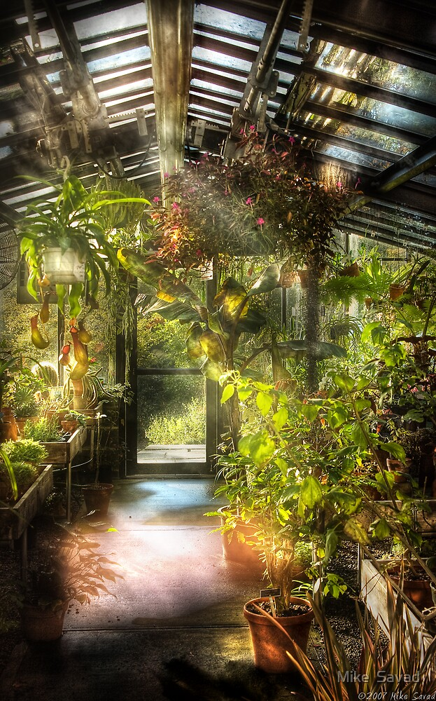 In the greenhouse by Michael Savad
