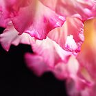 Beautiful Gladiolus Petals Pink by Joy Watson