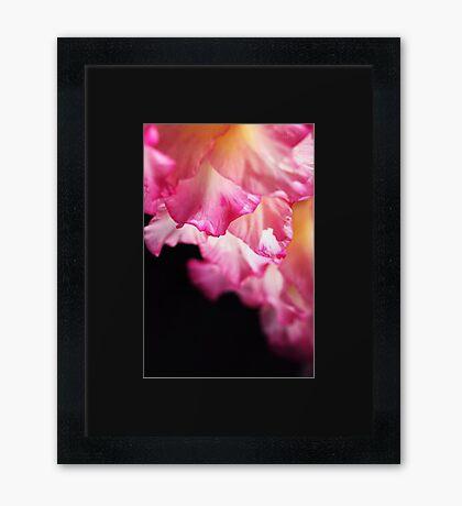 Beautiful Gladiolus Petals Pink Framed Print