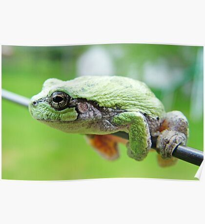 Frog On A Wire Poster