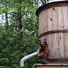 Bear Barrel by tachamot
