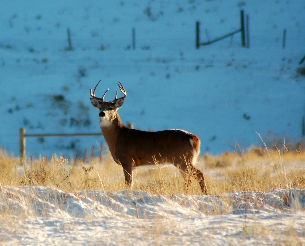 Whitetail Buck by postmsterjim0