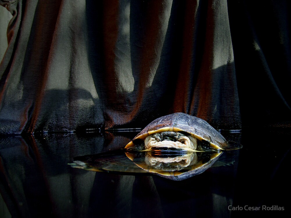 A Turtle Over Another Turtle  by Carlo Cesar Rodillas