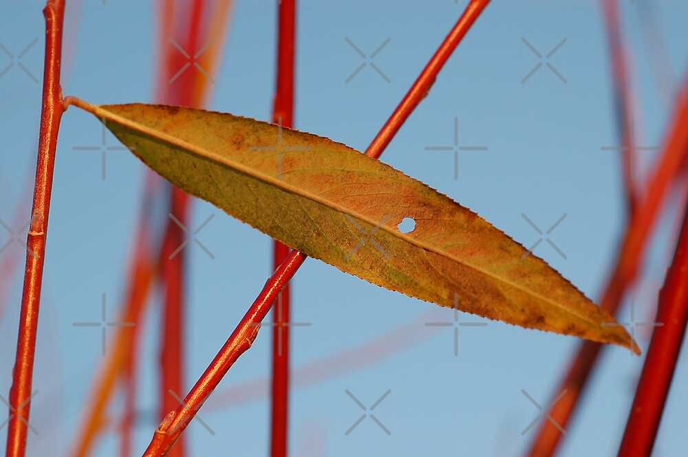 Leaf Elipse by ApeArt
