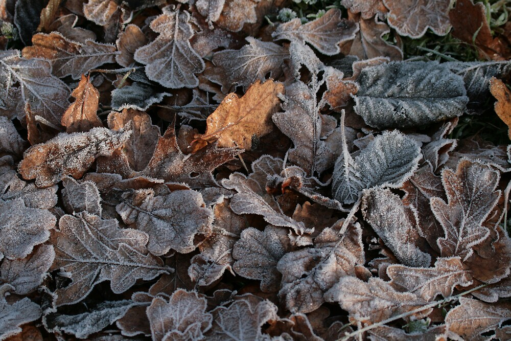 Frosty Leaves by Monster
