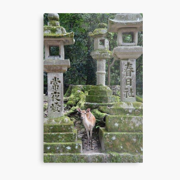 Nara, Japan Metal Print