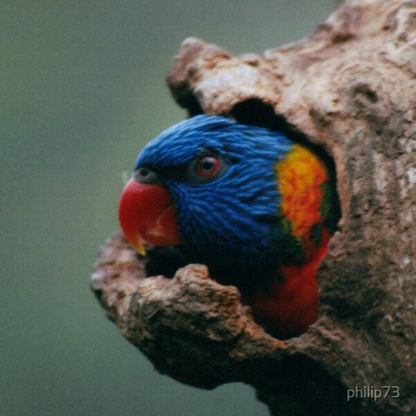 Bird in a tree by philip73