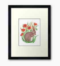 shy bunny among poppies Framed Print