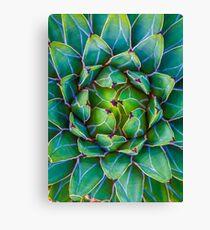 Succulent succulent Canvas Print