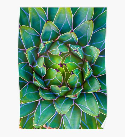 Succulent succulent Poster