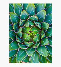 Succulent succulent Photographic Print