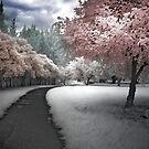 Parkland Path by Annette Blattman