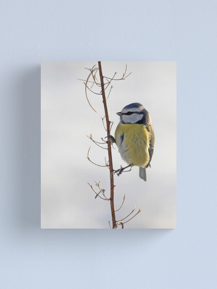 Alternate view of Blue Tit in winter Canvas Print