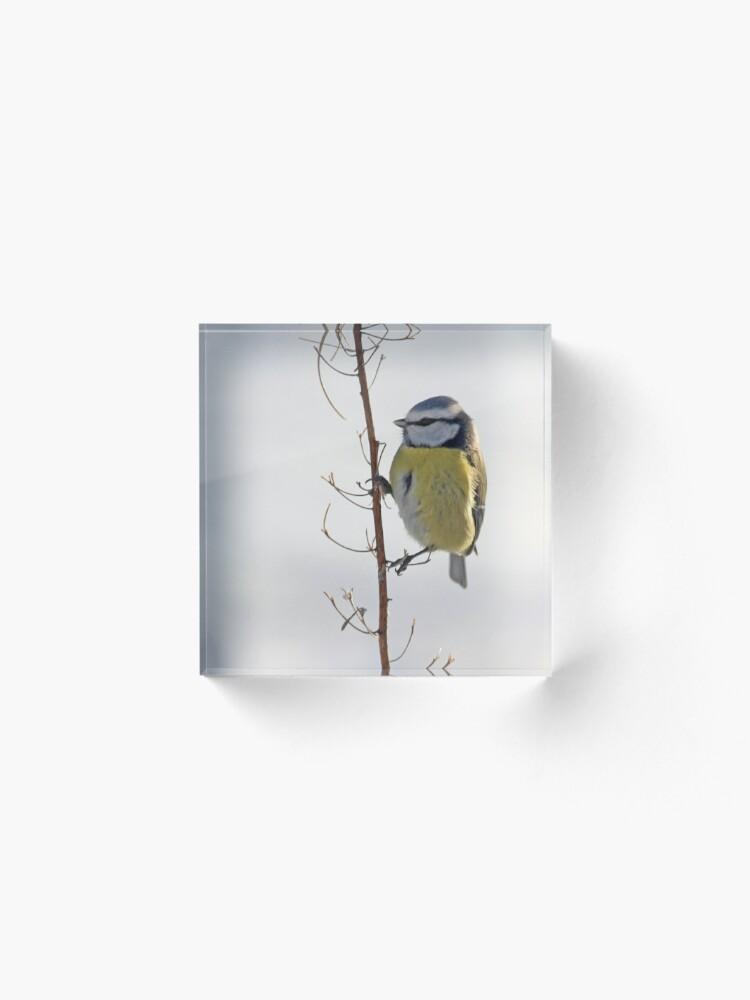 Alternate view of Blue Tit in winter Acrylic Block