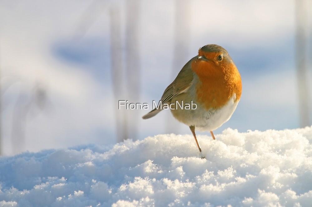 Winter robin by Fiona MacNab