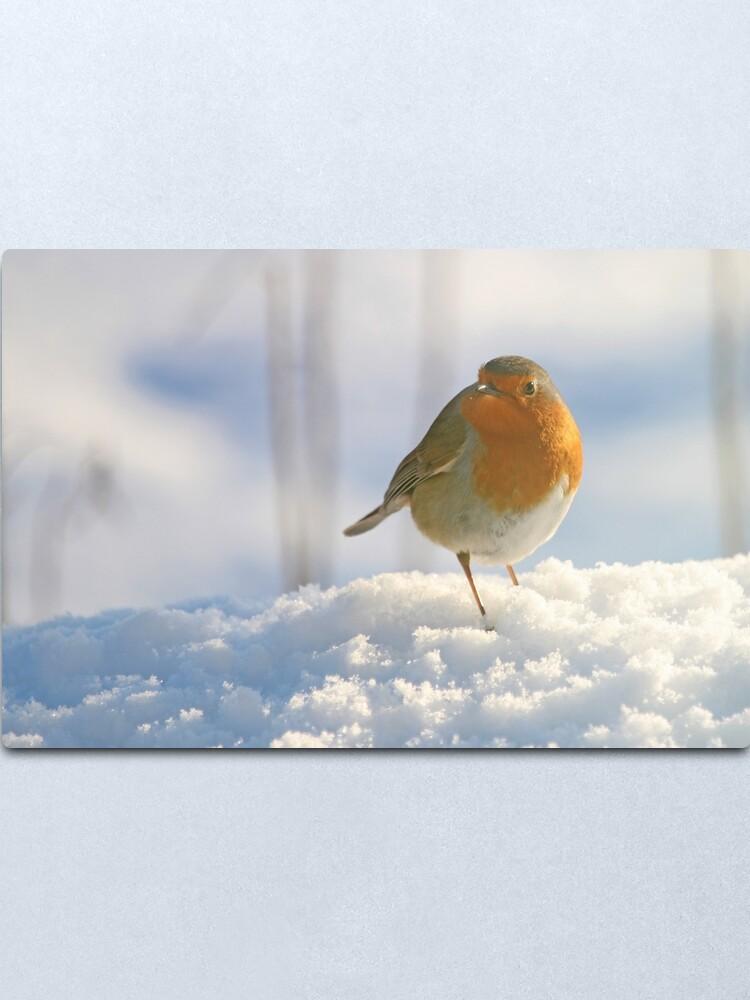 Alternate view of Winter robin Metal Print