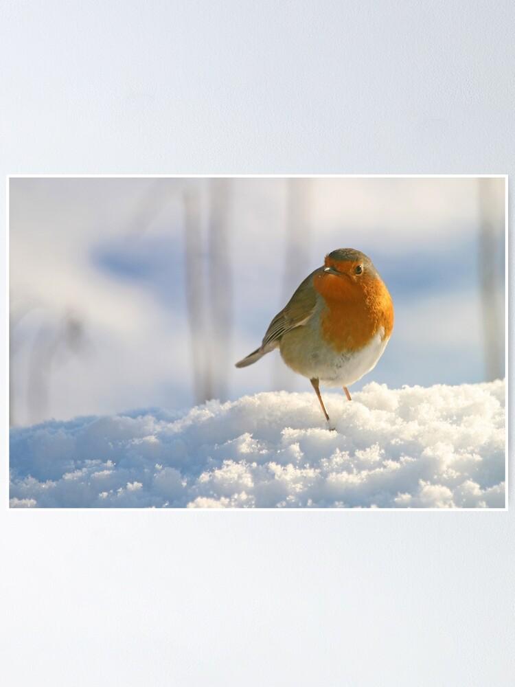 Alternate view of Winter robin Poster
