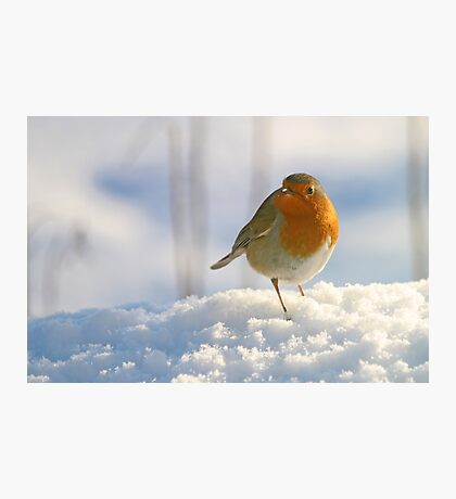 Winter robin Photographic Print