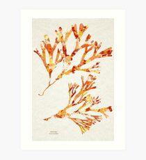 Ocean Seaweed Art Print