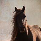 Sunlit fell pony by Mitch  McFarlane