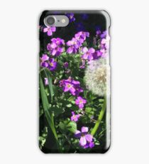 Purple Aubretia and Dandelion iPhone Case/Skin