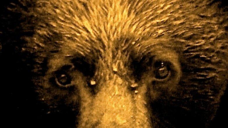Broken Bear by Liz Stevens