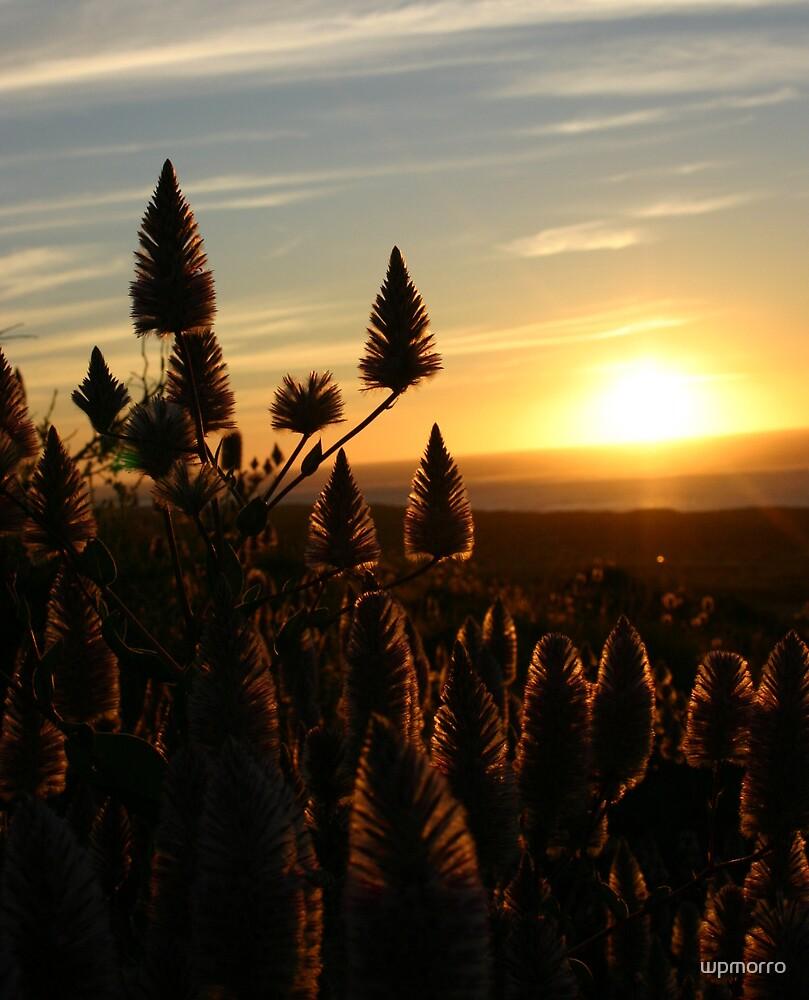 Mulla Mulla sunset by wpmorro