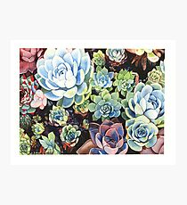 Succulent Field (watercolor) Photographic Print